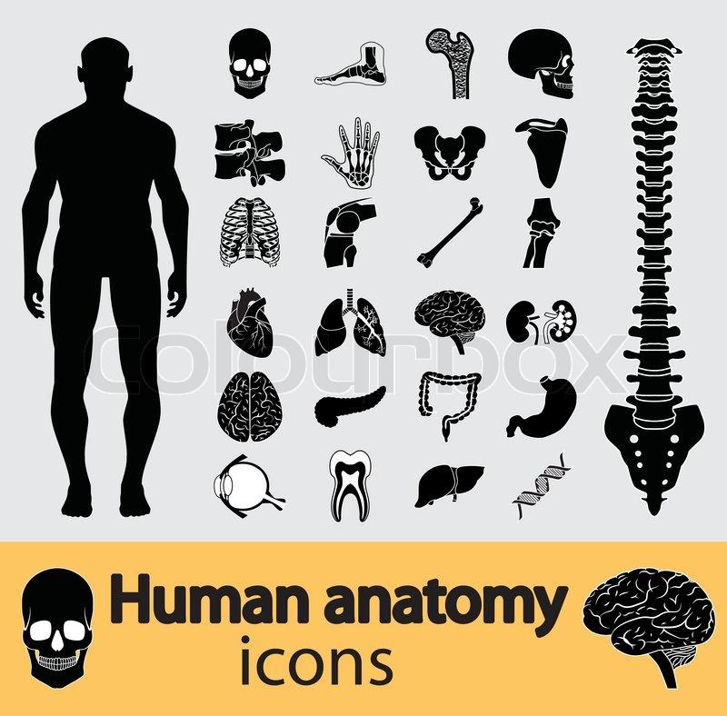 Menschliche Anatomie-Symbole | Vektorgrafik | Colourbox