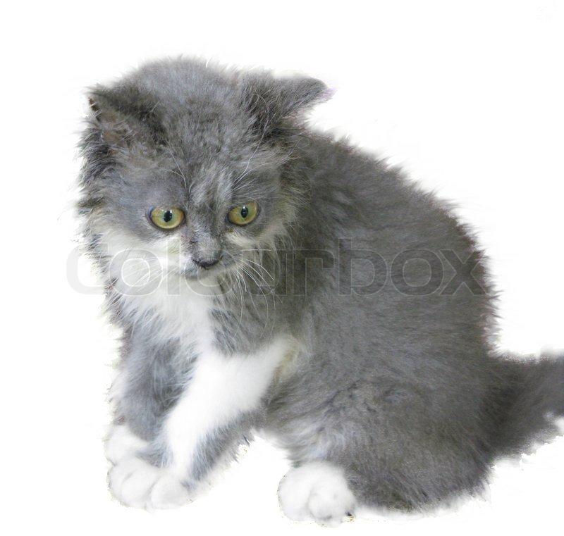 Cute grey and w...