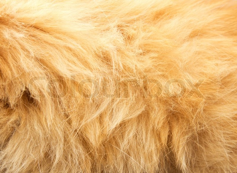 Red animal\'s hair as background, stock photo