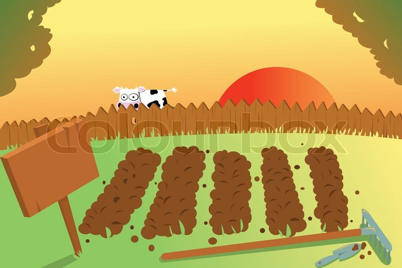 Sunset And Cow On Vegetable Garden Stock Vector Colourbox