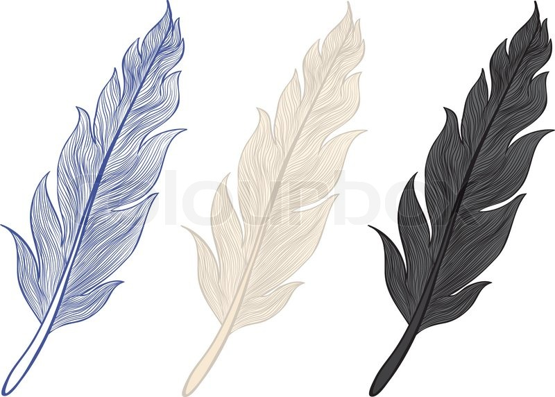 feathers stock vector colourbox