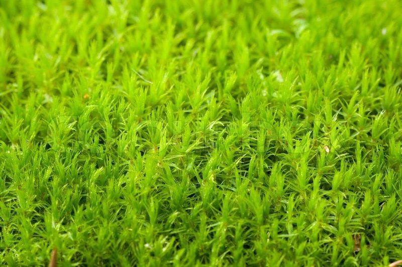 green moss stock photo colourbox. Black Bedroom Furniture Sets. Home Design Ideas