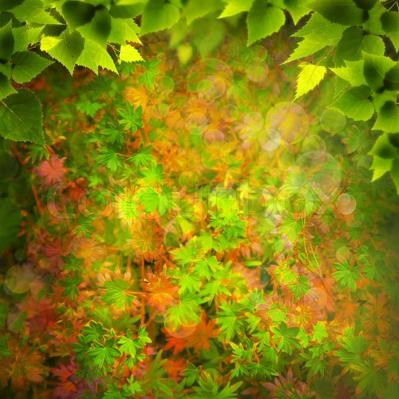 beauty nature abstract natural backgrounds for your design stock