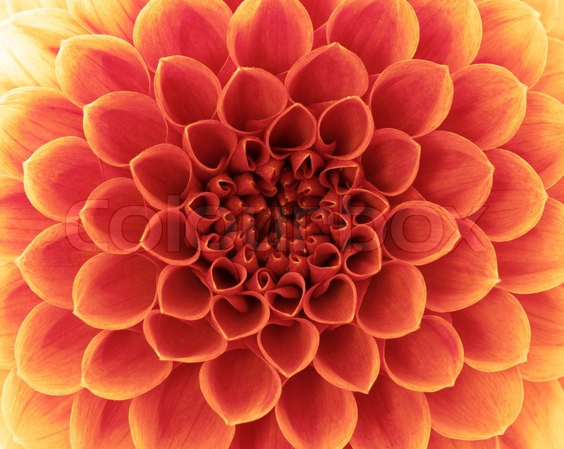 Abstract flower, stock photo