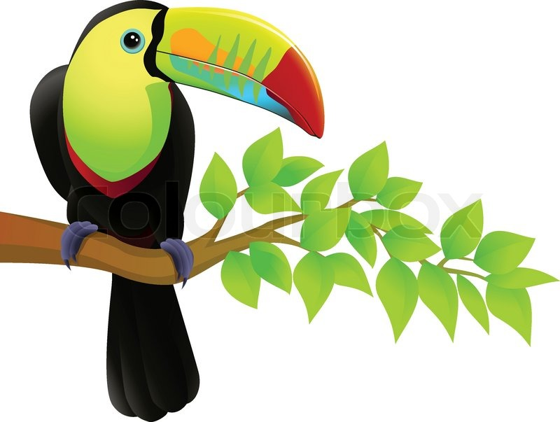 Image result for animated pictuers of toucan