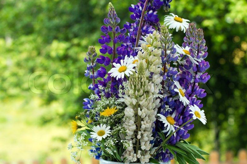 Midsummer Flowers Stock Image Colourbox
