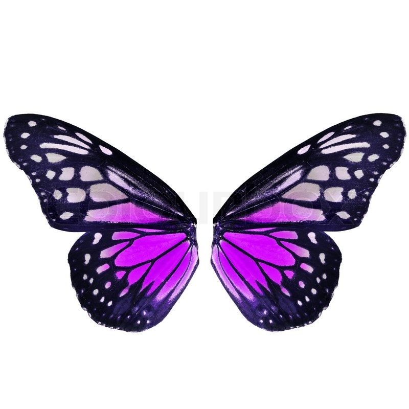Butterfly Wing | Stock Photo | Colourbox