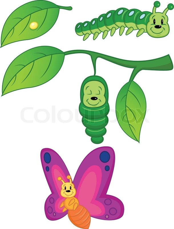 Butterfly Metamorphosis Stock Vector Colourbox
