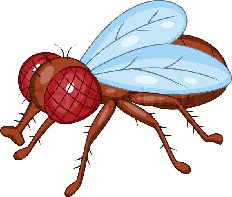 5202037 fly cartoon