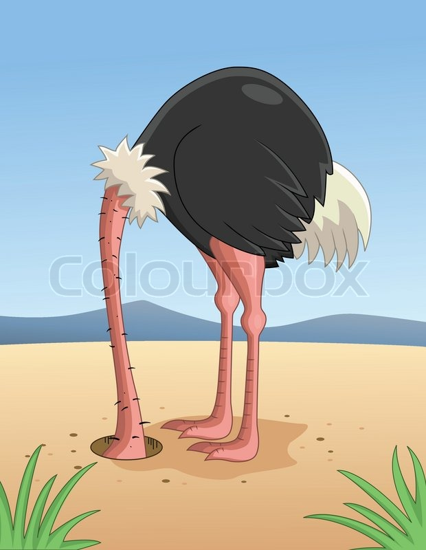 ostrich hiding head in sand stock vector colourbox
