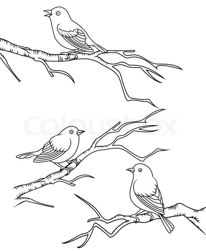 Bird Sitting On A Branch