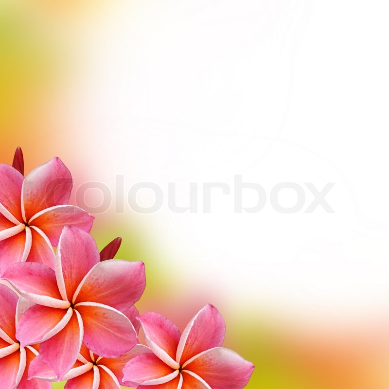 Frangipani Flowers Border Design Stock Photo Colourbox