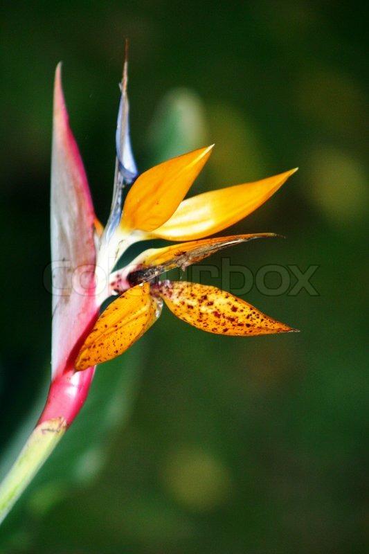 Night Flower, stock photo