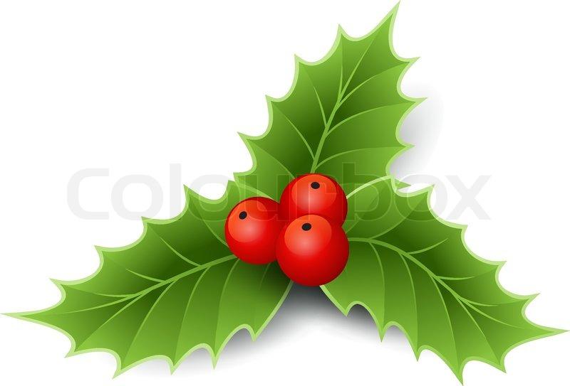 Christmas Holly Vector.Christmas Holly Stock Vector Colourbox