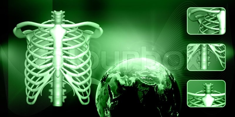 Human body rib cage in abstract background, stock photo