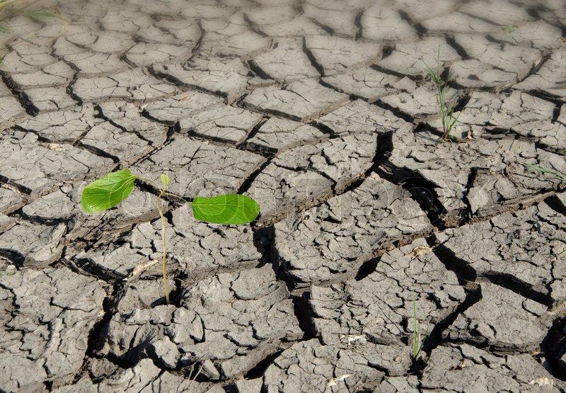 Sapling growing from arid land, stock photo