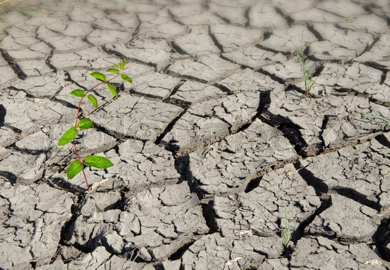 Plant growing from arid land, stock photo