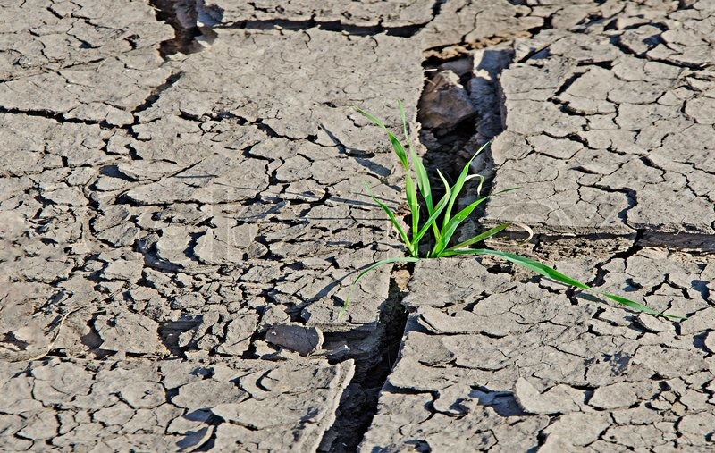 Grass growing from arid land, stock photo