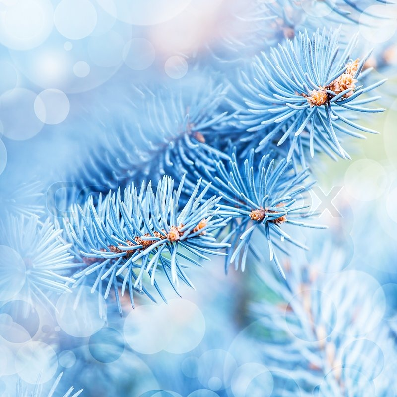 Stock image of 'Frozen fir tree background'