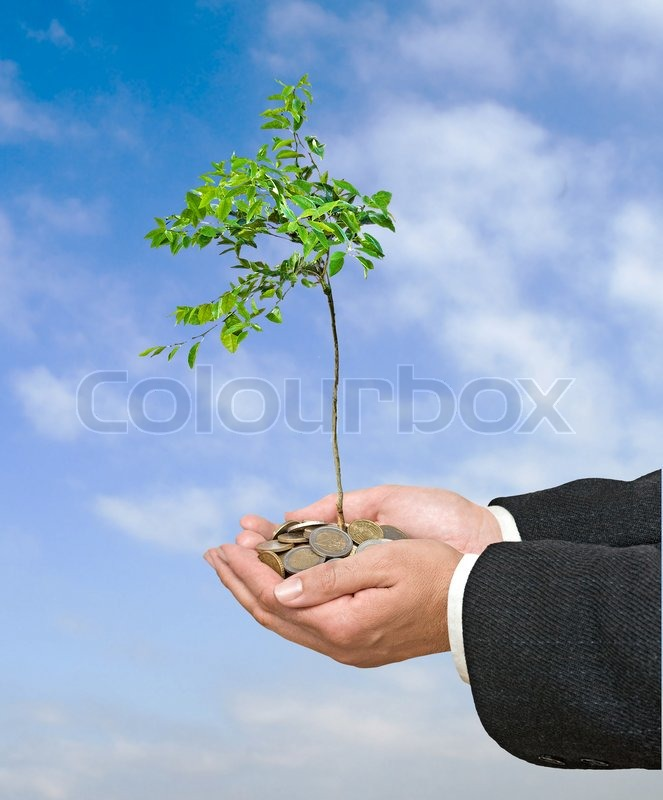 Young citrus tree growing from coins, stock photo