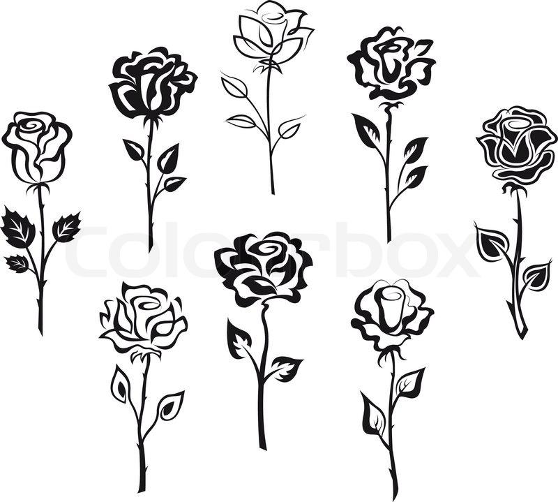 Rose stem silhouette