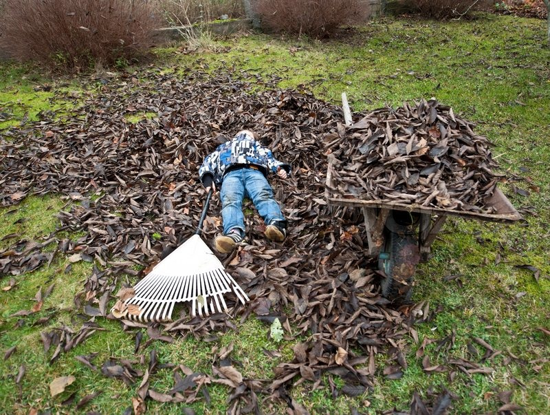 maintenance free lawn