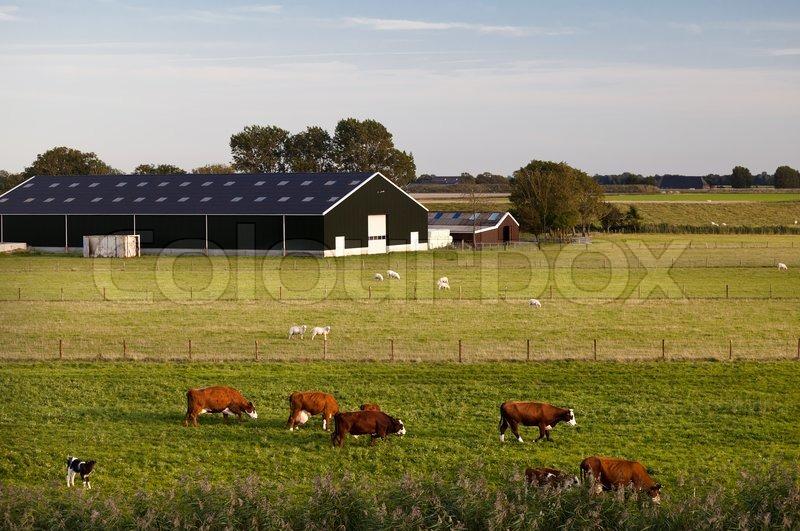 Charming dutch cattle farm stock photo colourbox for Farm house netherlands