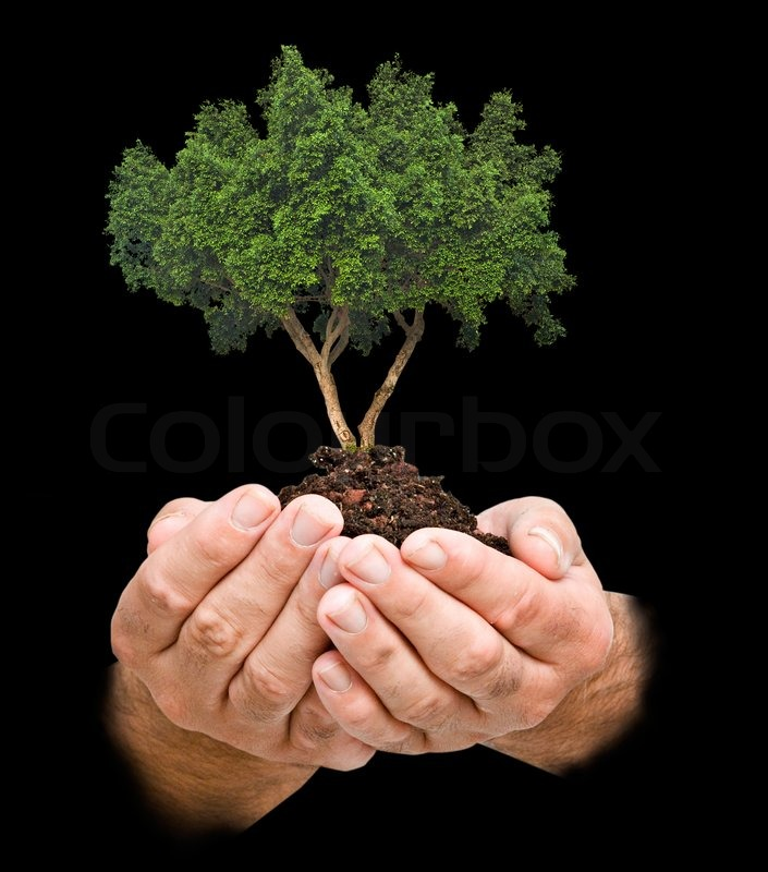 Stock image of 'Tree in palms as a symbol of nature protection'