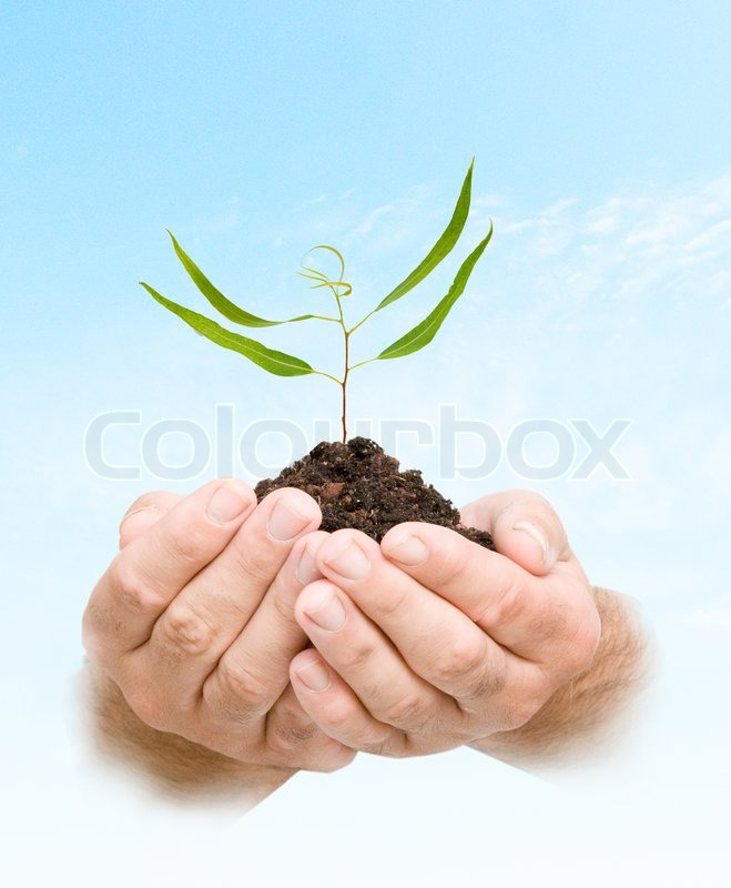 Sprout in palms as a symbol of nature protection, stock photo