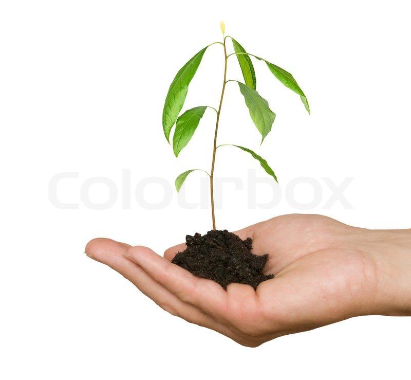 symbol træ