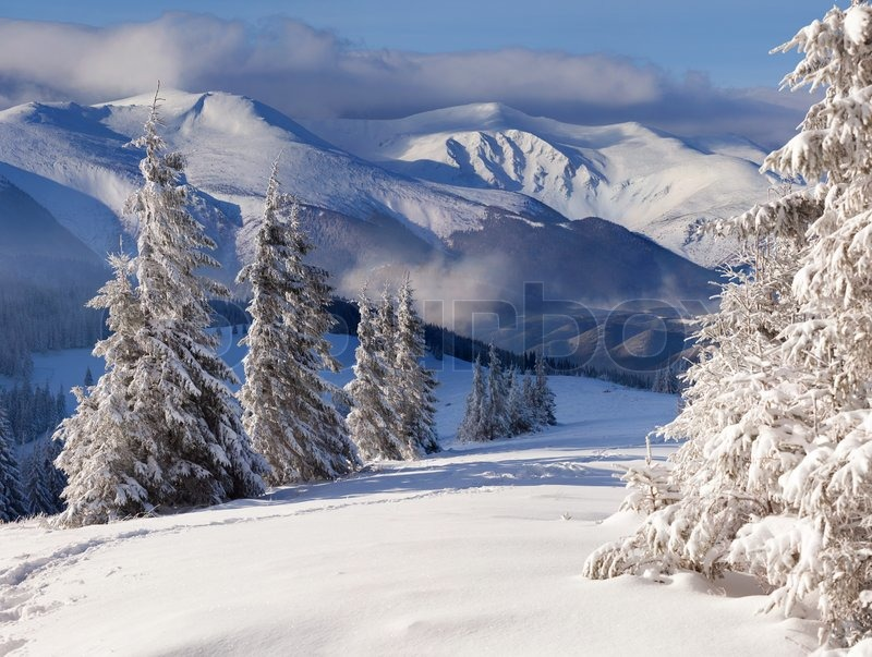 Beautiful Winter Landscape With Snow Covered Trees Stock