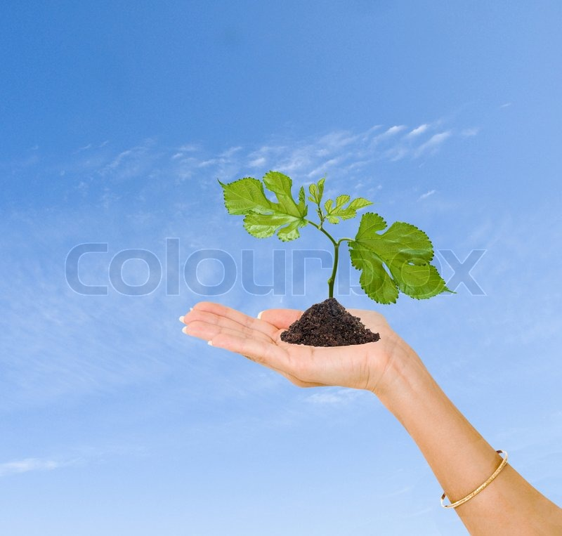 Sprout in palm as a symbol of nature protection, stock photo