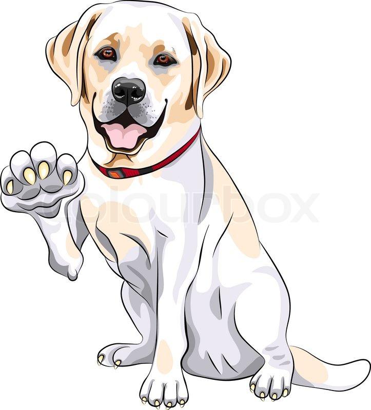 Vector dog Labrador Retriever cheerful smiles and gives a paw ...
