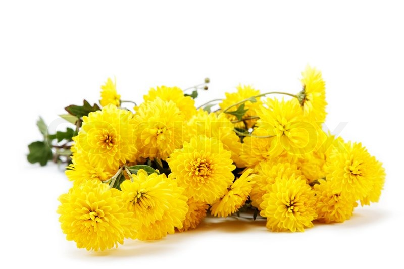 Bouquet of yellow flowers, chrysanthemums isolated on ...