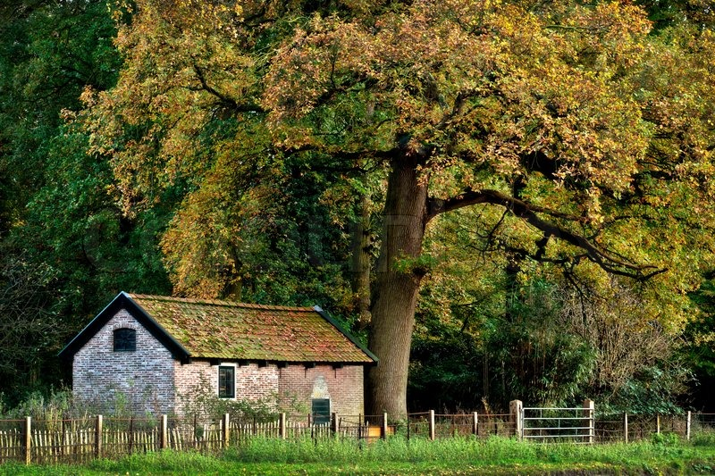 An old house under a huge beautiful tree in autumn for Beautiful classic houses