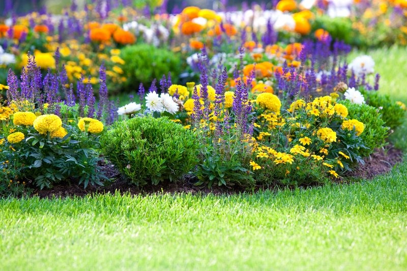 blomsterbed inspiration Multicolored flowerbed on a lawn | Stock Photo | Colourbox blomsterbed inspiration
