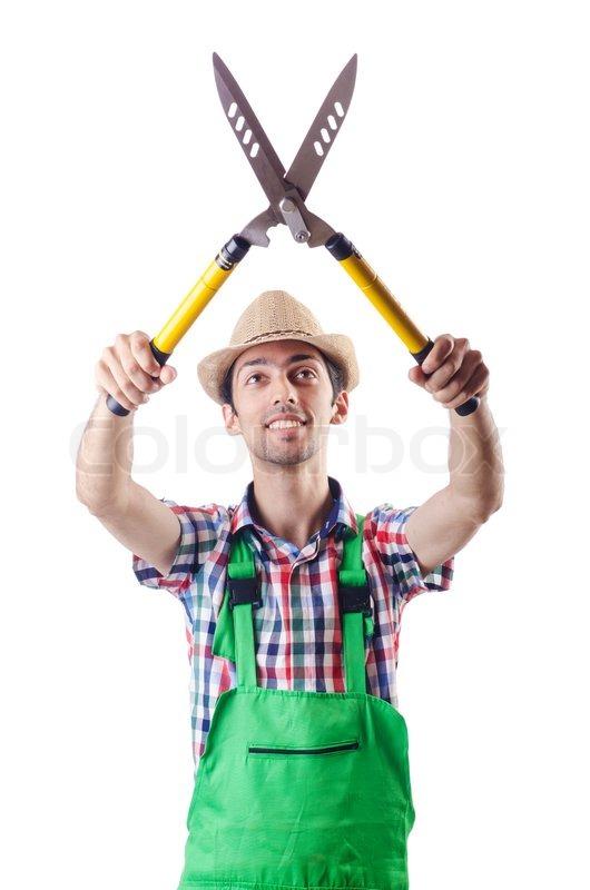 man gardener with shears on white stock photo colourbox
