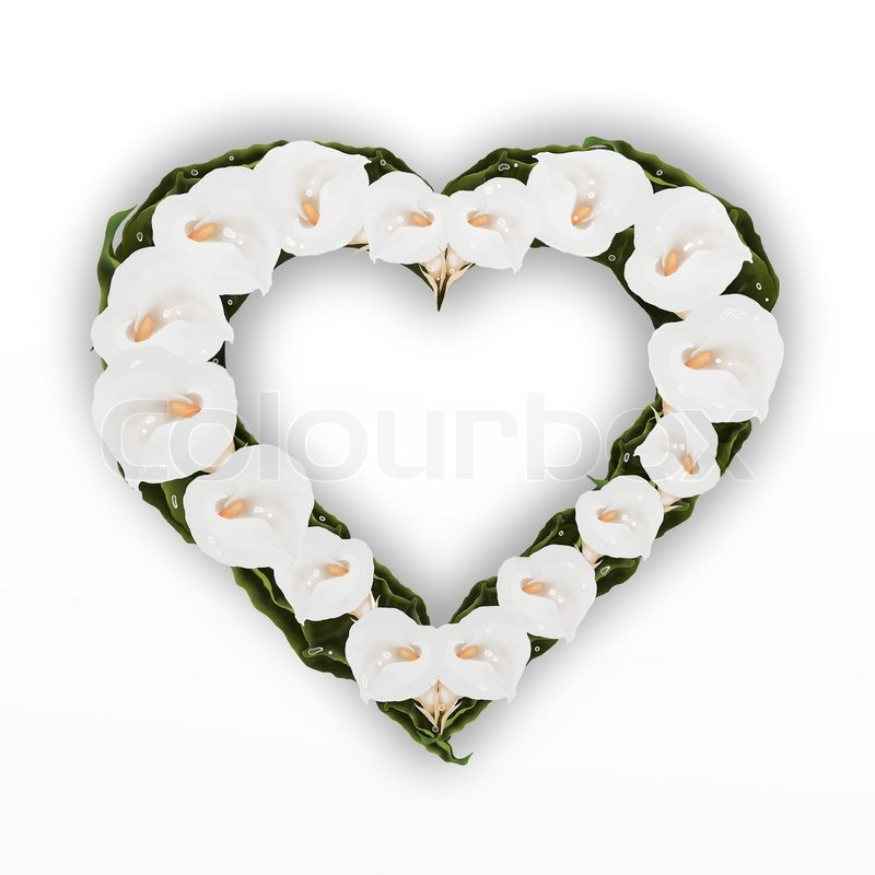 A Beautifully Heart Frame of White Calla Lily Flower, Isolated on A ...