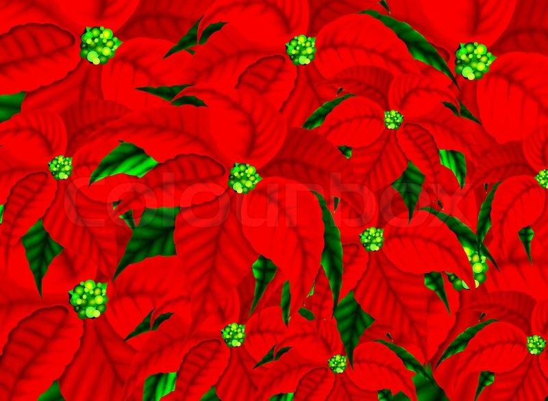 beautiful christmas flowers or red poinsettia plants