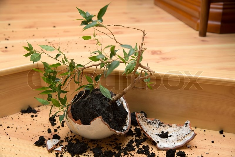 Plant in a broken flower pot | Stock Photo | Colourbox