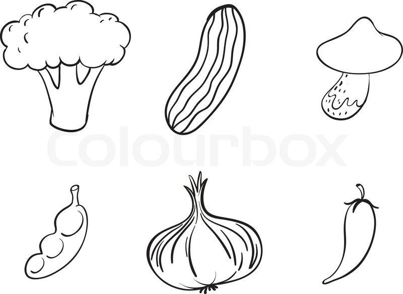 Line Art Vegetables : Vegetable outline stock vector colourbox