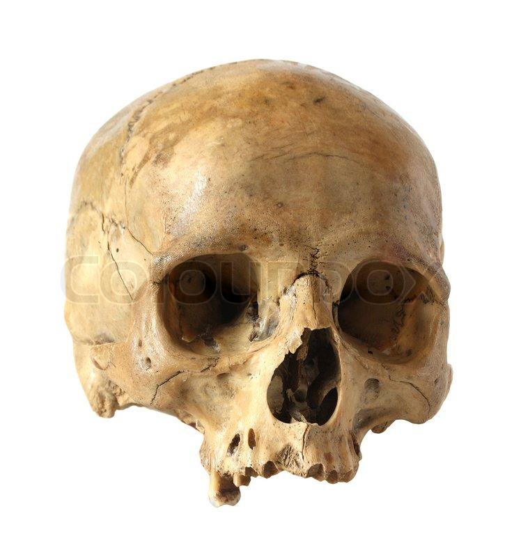 Human skull   Stock Ph...