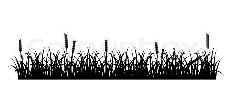 Grass And Wheat Silhouette Stock Vector Colourbox