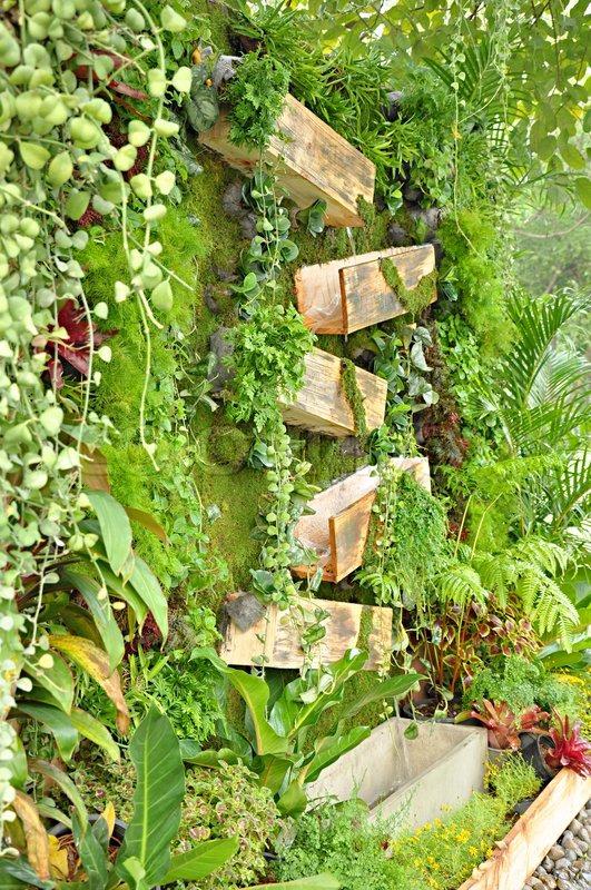 tropische pflanzen in vertikaler garten stock foto colourbox. Black Bedroom Furniture Sets. Home Design Ideas