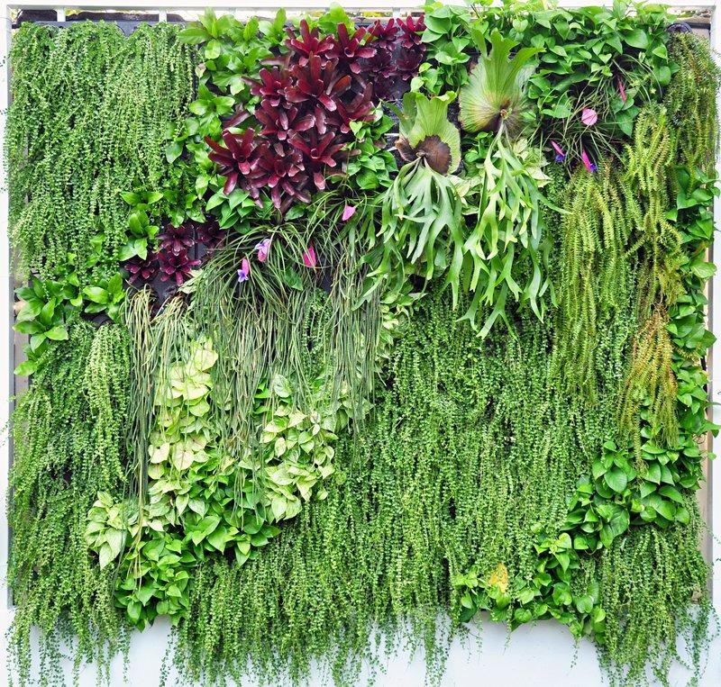 Tropische Pflanzen in vertikaler Garten | Stockfoto | Colourbox