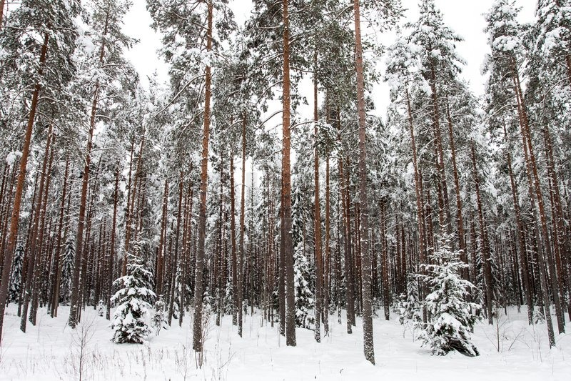 vs skov og have guiden massage