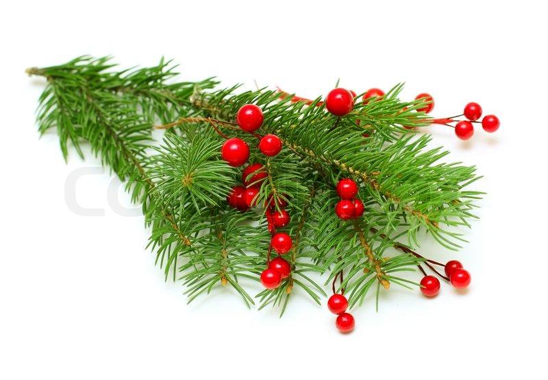 weihnachten gr nen zweig mit roten beeren isoliert stockfoto colourbox. Black Bedroom Furniture Sets. Home Design Ideas