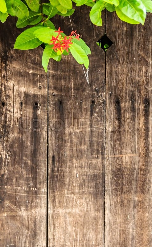 Weathered Wood Background With Red Flower And Green Leaves