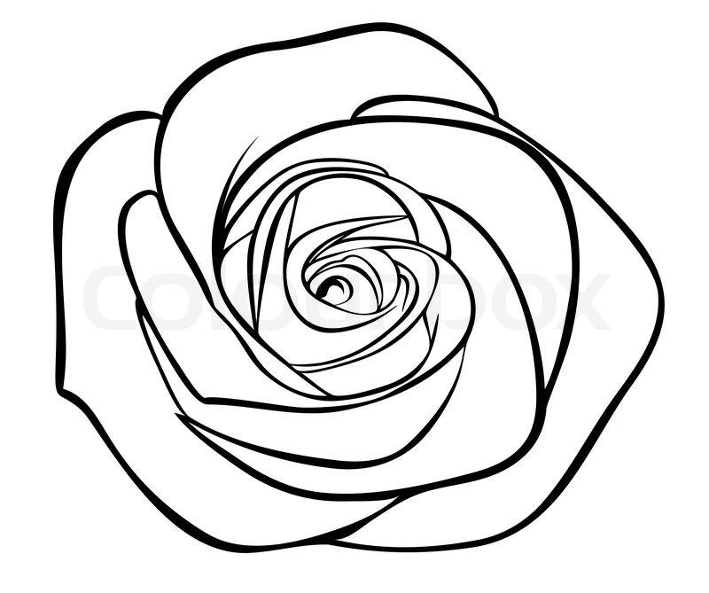 Showing post & media for White rose cartoon | www.cartoonsmix.com