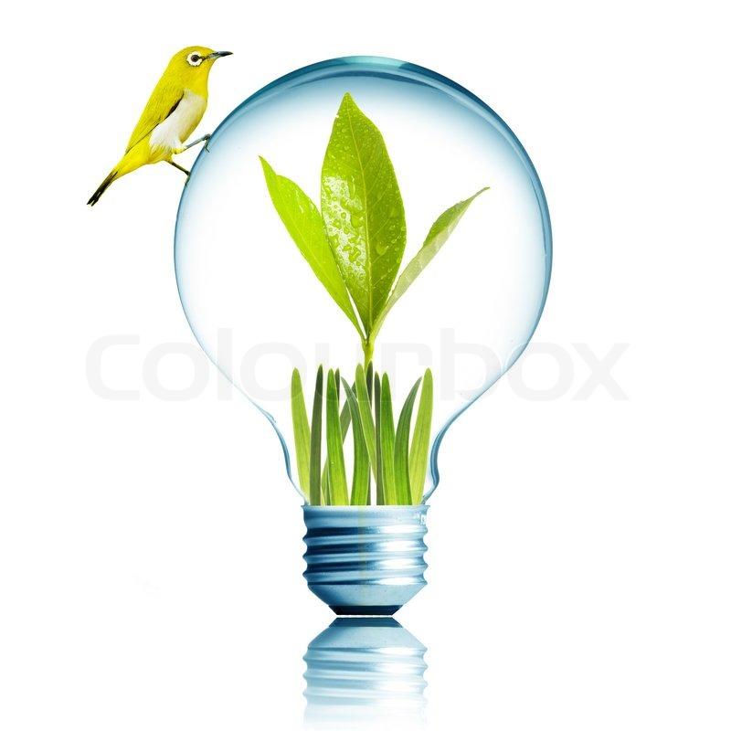 Frische grüne Pflanzen wachsen im Inneren Glühbirne mit gelben Vogel ...